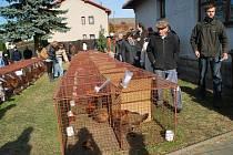 V Bohdalově v sobotu začala dvoudenní tradiční chovatelská Výstava Vysočiny 2013