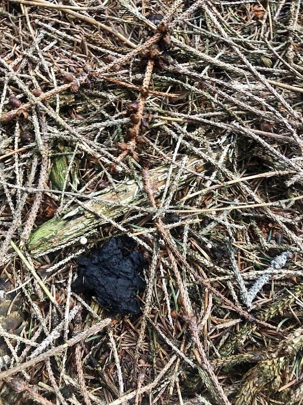 Staré plodnice holubinek černajících nevypadají příliš vábně.