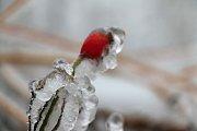 Žďársko se změnilo v ledové království.