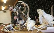 """Instalace výstavy trofejí zvěře ulovené v roce 2017 v honitbách okresu Žďár nad Sázavou a oblasti chovu jelení zvěře """"Žďárské vrchy""""."""