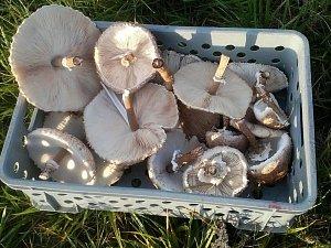 Našli jste plné koše hub nebo ukázkové hřiby? Pochlubte se ostatním!