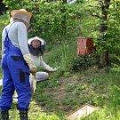 Marcela Lorencová se včelám věnuje tři roky. Začínala se dvěma úly a dnes už má čtyři. Postupně se od svého mentora naučila vše, co ke včelaření patří.
