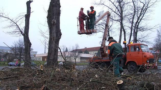 Pravidelnou údržbou a prořezávkou procházejí nyní stromy a keře ve Žďáře nad Sázavou.