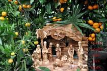 Podívejte se na vypěstované citrusy našeho čtenáře