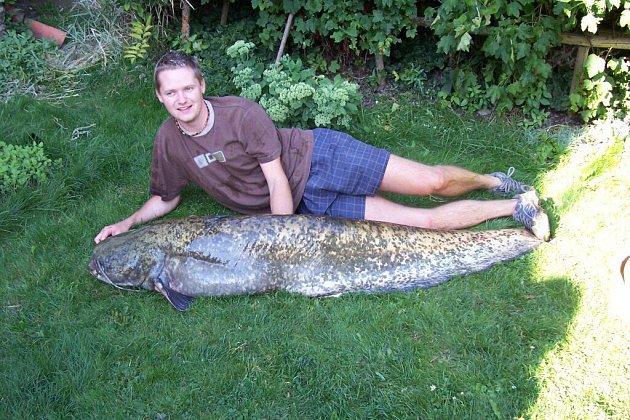 Sto osmdesát centimetrů dlouhého sumce vážícího čtyřicet šest kilogramů ulovil herálecký rybář Tomáš Odvárka ve vodách Pilské nádrže.