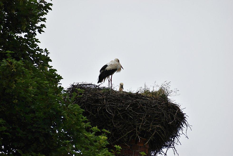 Mirošov je dokonalým ptačím rájem. hnízdí tam čápi, sovy i dravci.