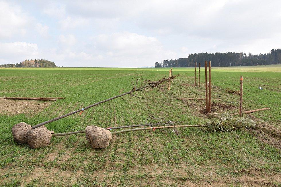 Polní cesta se stromořadím u Vetelských rybníků na Žďársku.