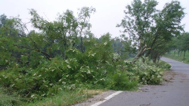 Spadlý strom mezi Herálcem a Kocandou.