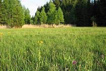 Sdružení Krajina se stará o údržbu podmáčených luk, na Žďársku velká část z nich se nachází v CHKO Žďárské vrchy.