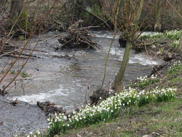 Rezervace a přírodní památka Údolí Chlébského potoka se v posledních dnech stala cílem výletů stovek turistů