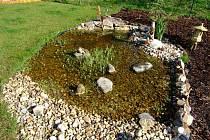 Mělké zahradní jezírko ve Vojnově Městci se zalíbilo čolkům. Již druhým rokem se tam rozmnožují.
