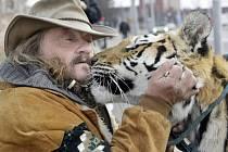 Principál se se svými šelmami po ránu pozdraví. Nechybí ani políbení na čumák. Na procházku jde tygřice Tajga na vodítku. Je to přece jen divoká kočka. Ale krásná...