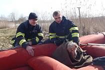 Psa se hasičům povedlo z vody zachránit