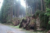 Desítky stromů strhla bouře v okolí Vojnova Městce.