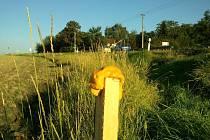 Dřevěné kolíky s pěnou obsahující chemickou látku, která zvěř odpuzuje, si myslivci pochvalují.