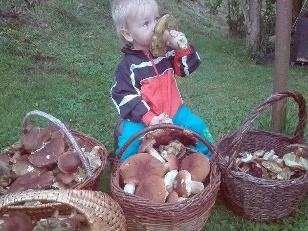 Marek Krása z Jimramova s plnými koši hub.
