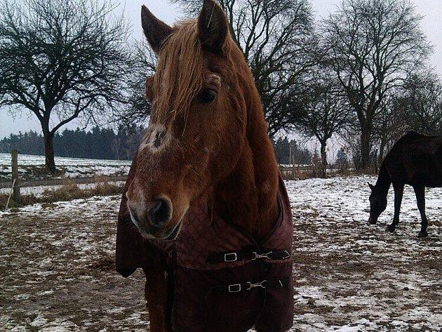 Benefiční akce věnovaná takzvané Koňské záchytce se uskuteční v Kadově u Nového Města na Moravě. Od založení v roce 2010 prošetřila záchytka více než padesát případů koní v nouzi.