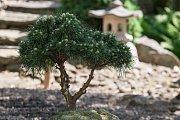 Kolem sedmdesáti bonsají různých druhů, stáří i velikostí skrývá dvůr rodinného domu v Kněževsi na Žďársku.