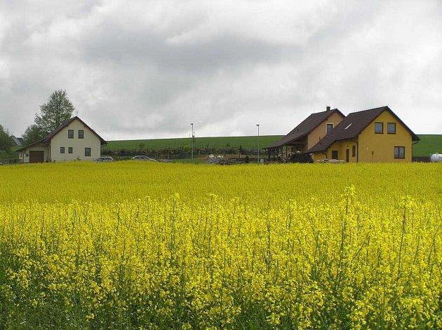 Řepkové pole nejsou na Žďársku žádnou výjimkou. Rozšiřovat se však už nebudou.