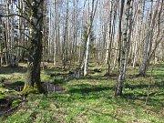 V lokalitě Hliníky se dřívě těžil jíl (na snímku), pak ale začalo místo zarůstat a v současné době je silně znehodnoceno. Díky projektu Sdružení Krajina ale dojde k jeho obnově.