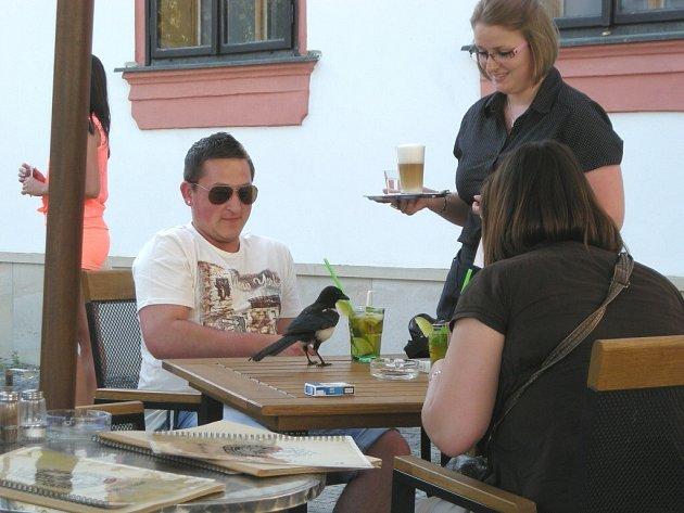 Straka jako vynikající občerstvovací stanici vyhodnotila zahrádku Radniční restaurace ve Žďáře nad Sázavou.