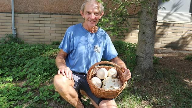 Vatovce jsou výborné jako řízky a dají se upravit i na cibulce s vejci.