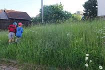 Na místě udržovaných městských trávníků byly vloni a předloni divoce rostoucí louky.