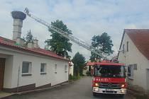 Profesionální hasiči se podíleli na kroužkování čápů na Žďársku.