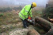 Odborníci dokážou pokácet stromy i v místech, ve kterých by si laik netroufal.