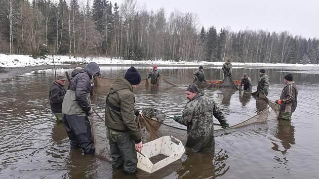 Stovky ryb v sítích: ve Svratce vylovili po 23 letech stejnojmenný rybník