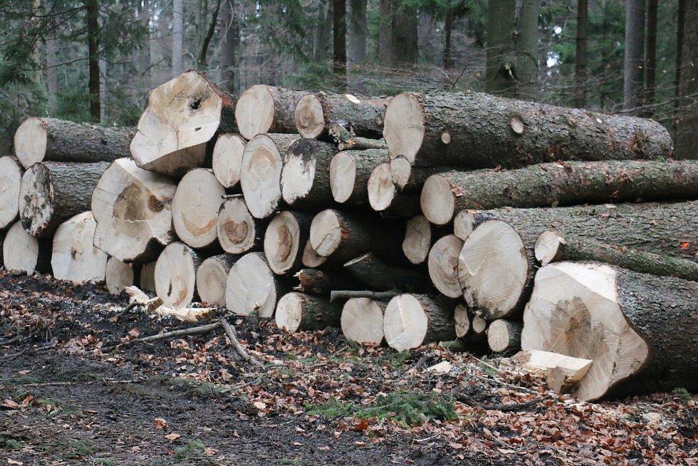 V lesních porostech Kinských roste rezonanční dřevo, které bude použito na výrobu klavírů a pianin.