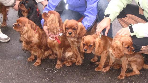 Poplatek za psy bude v některých městech letos vyšší. Chovatelé sáhnou hlouběji do kapsy.