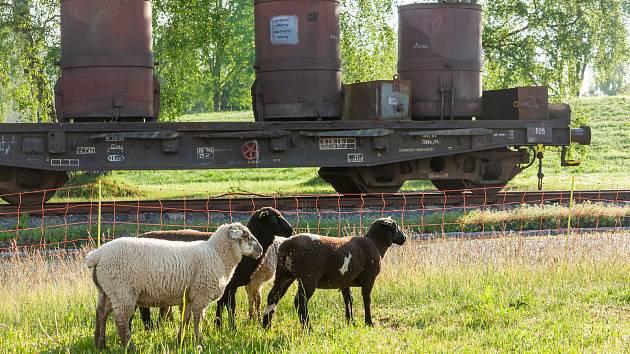 K ovcím pořídili ve Žďase i včely.
