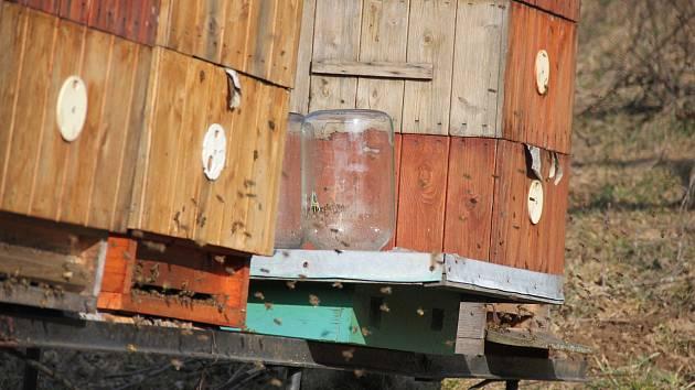 Následujícího půl roku budou ve žďárském zámku sídlit včely