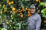 Výjimečný pěstitelský rok letos eviduje Petr Broža z Pikárce.