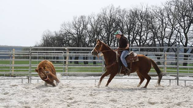 HONÁCI. Aréna v Mitrovském dvoře patřila jezdcům a koním při práci s dobytkem.