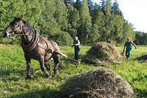Díky ručnímu sekání trávy se na podmáčené louky vracejí vzácné druhy rostlin a živočichů. Foto: archiv Sdružení Krajina