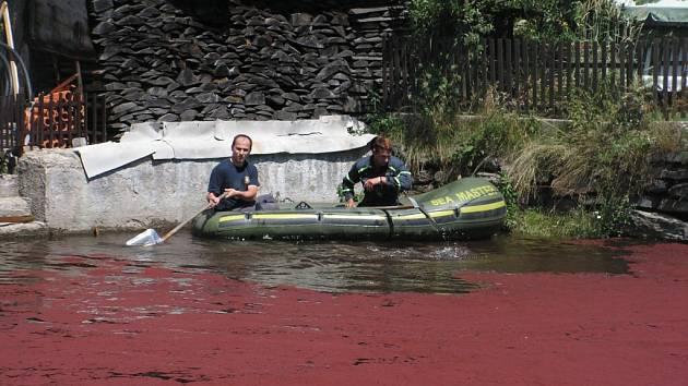 Hasiči lovili krásnoočko z vody marně, další den se červený povlak na rybníci vytvořil znovu.