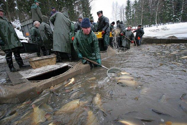 Rybolov v největším rybníku v kraji Vysočina – Velké Dářko.