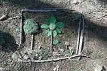 Land art je umělecký směr, při němž umělec používá ke své tvorbě organický a anorganický materiál.