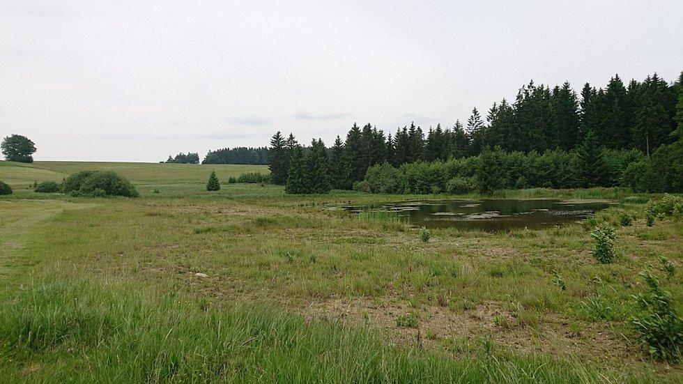 Mokřad a vodní tůně ve Skleném na Žďársku.