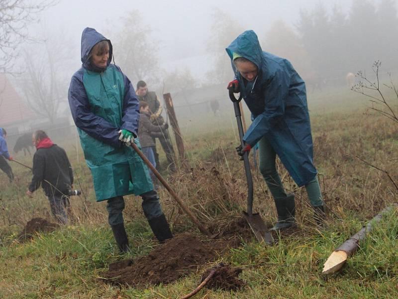 Sázení stromů u Studnic.