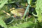 Akce se uskutečnila při příležitosti Mezinárodního dne ochrany žab, který se celosvětově slaví poslední dubnovou sobotu.