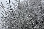 Stromy, keře i rostliny dostaly bílý kabát.