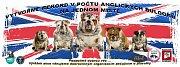 Chovatelé a fanoušci psího plemene anglický buldok zamíří začátkem října do Netína na Žďársku. Uskuteční se tam akce s charitativním podtextem. Navíc se návštěvníci srazu pokusí o zápis do knihy rekordů.
