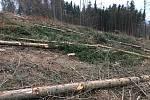 Lesy z Vysočiny mizí závratnou rychlostí.