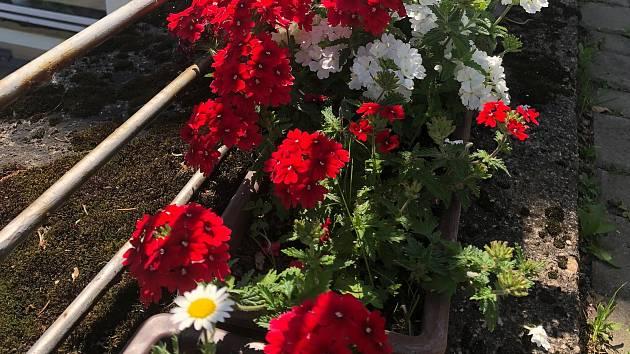 Pacienti mohou trávit volný čas u květinové zahrádky.