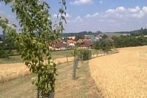 Bohuňovská alej