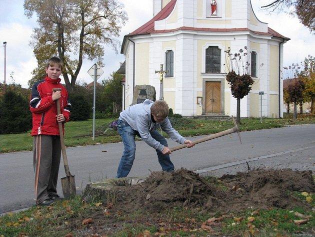 Opět o něco zelenější bude náměstí v Horní Bobrové. V pátek tam žáci základní školy vysázeli pod dohledem hajného Karla Uhlíře pět lip.