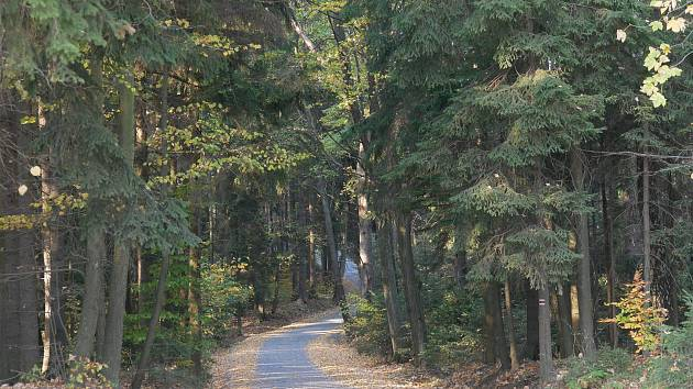 Nová lesní cesta bude hotová do konce prázdnin